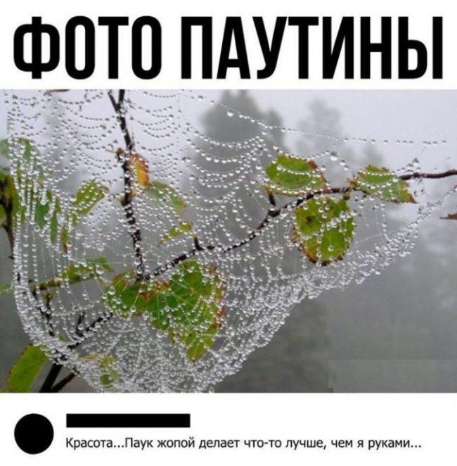 Прикольные картинки про жизнь (65 фото)