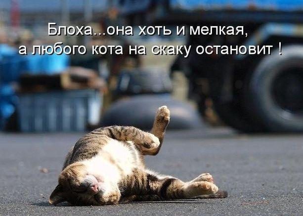 Прикольные фото котов с надписями (45 фото)