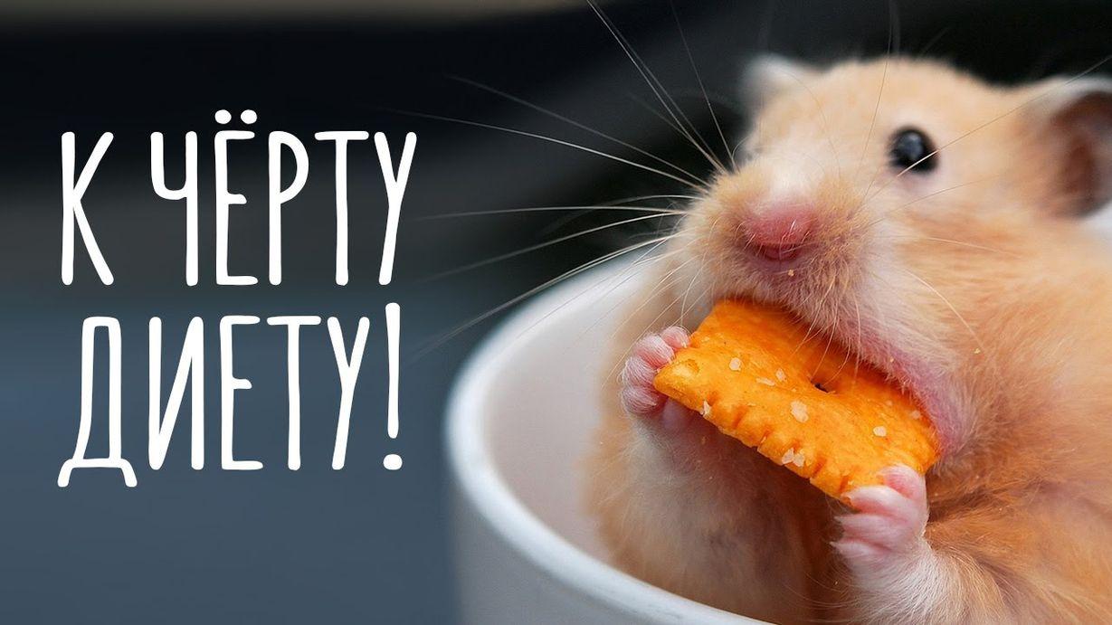 Смешные картинки с животными и надписями приятного аппетита