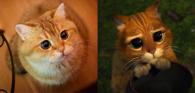 Прикольные картинки про домашних животных (45 фото)
