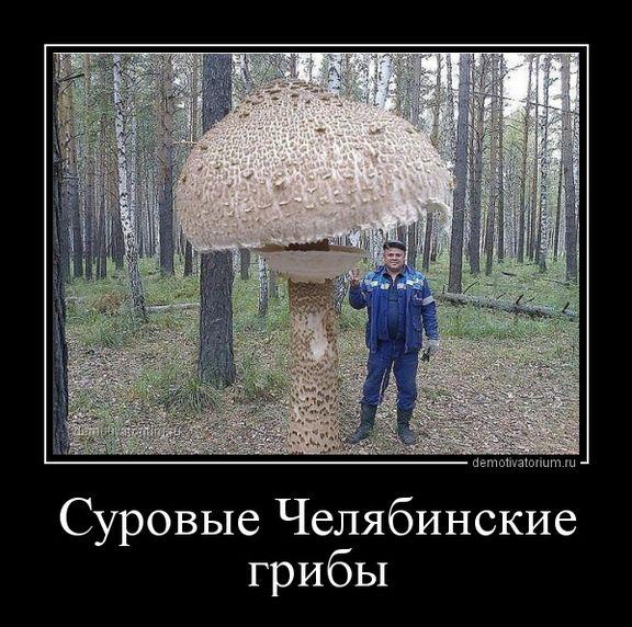 Год, прикол с грибами картинки
