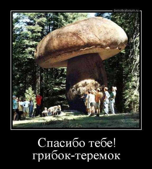 Прикольные картинки про грибников (50 фото)