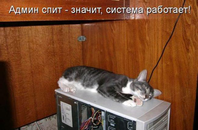 Прикольные картинки про кошек с надписями (55 фото)