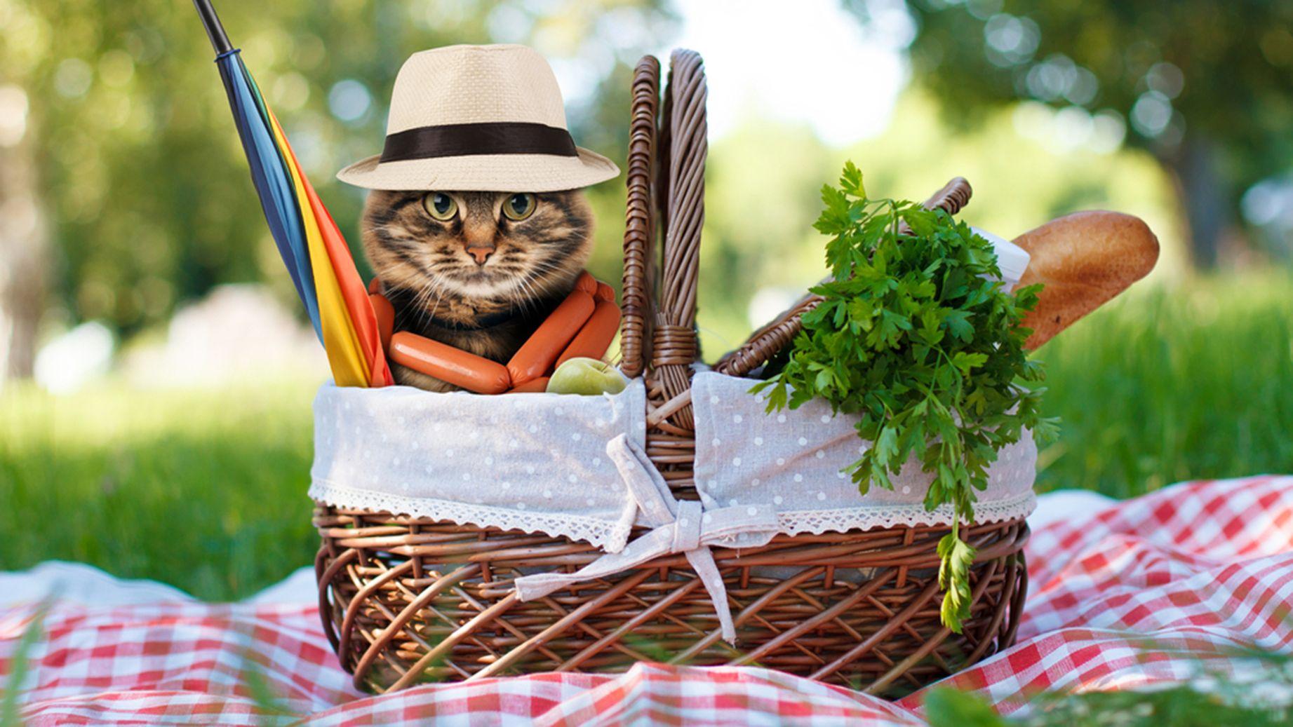 выявление причины картинка кошки на шашлыках природе активно укрепляет свои