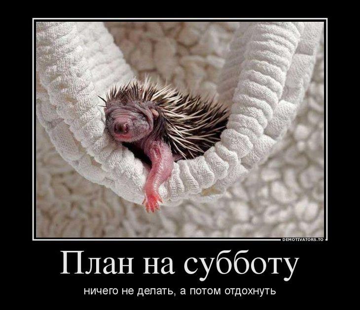Прикольные фото из болгарии водосточные воронки