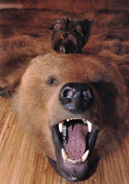 Прикольные картинки про животных на телефон (45 фото)