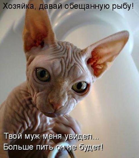 Прикольные картинки про животных с надписью новые (45 фото)