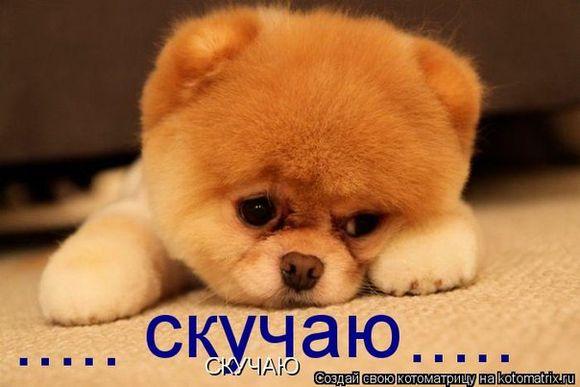 Прикольные картинки: «Я скучаю!» (55 фото)