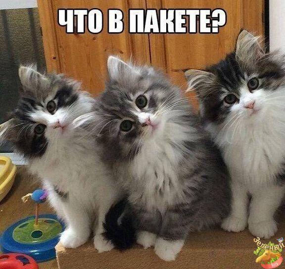 Смешные картинки котят с надписями (44 фото)