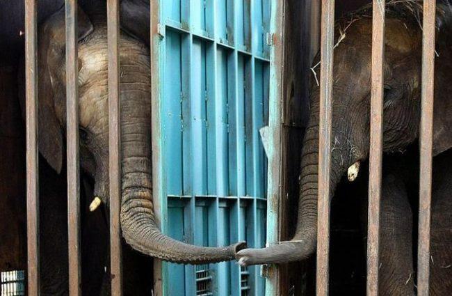 Картинки прикольные про слонов (44 фото)
