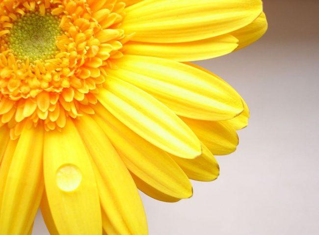 Картинки про цветы прикольные (55 фото)