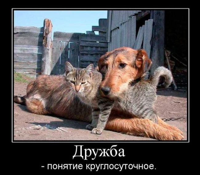 Прикольные картинки про дружбу с надписями (64 фото)