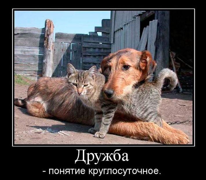 Открытка, картинки с цитатами смешные про дружбу