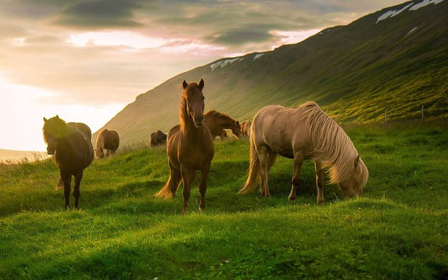 Прикольные картинки про коней (48 фото)