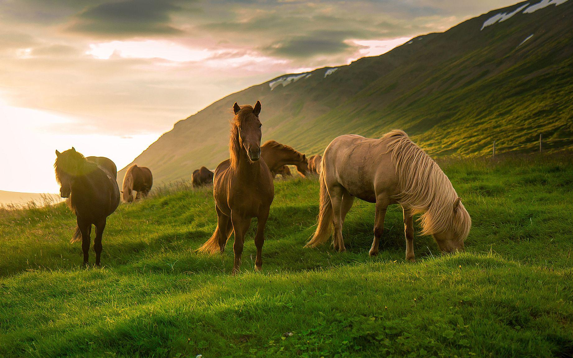 Лошадь рабочая картинка