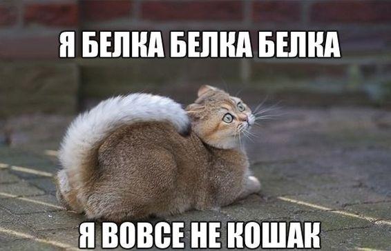 Прикольные картинки про котов (93 фото)