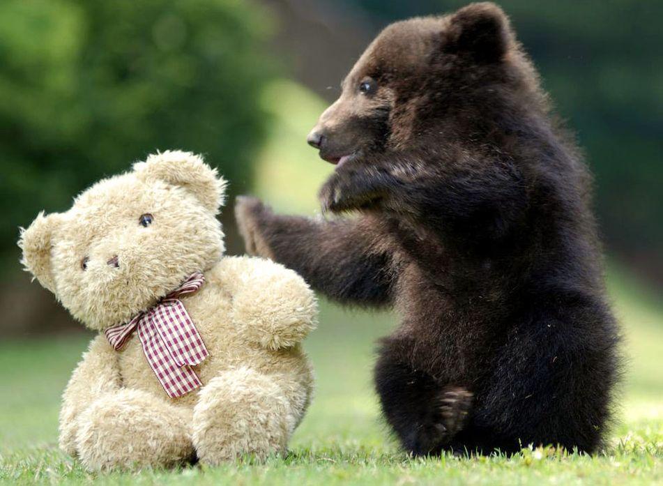 веселые картинки медвежонка работа приносила