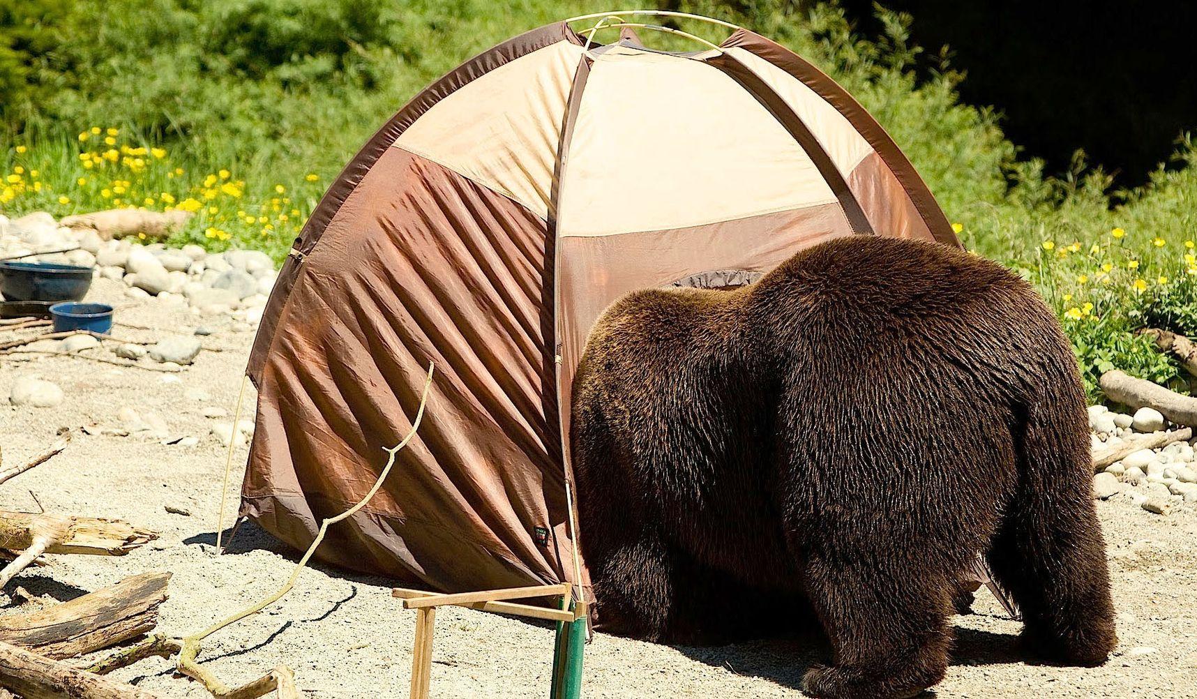 веселые картинки с палатками выбирает уроки каратэ