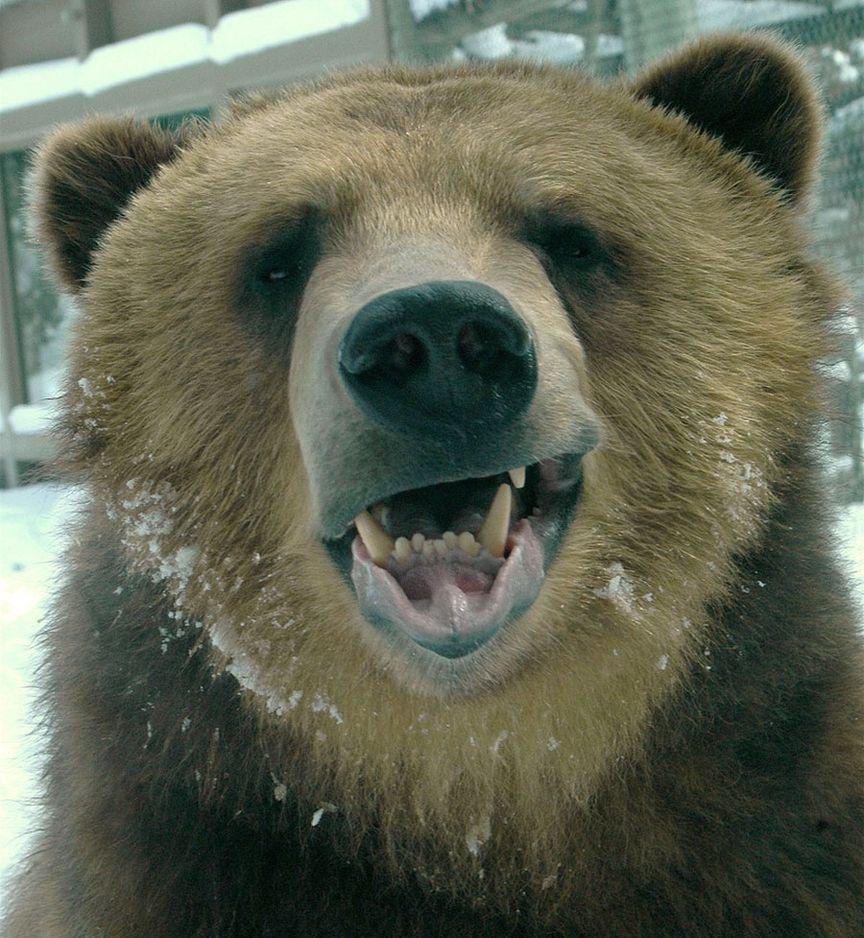 Днем рождения, медведь приколы картинки