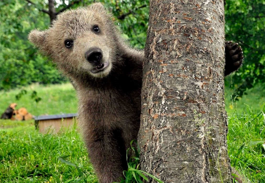 Медвежата фото смешные