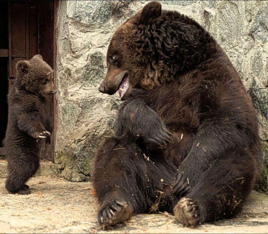 комплекс очень прикольное необычное фото медвежат том, что сегодня