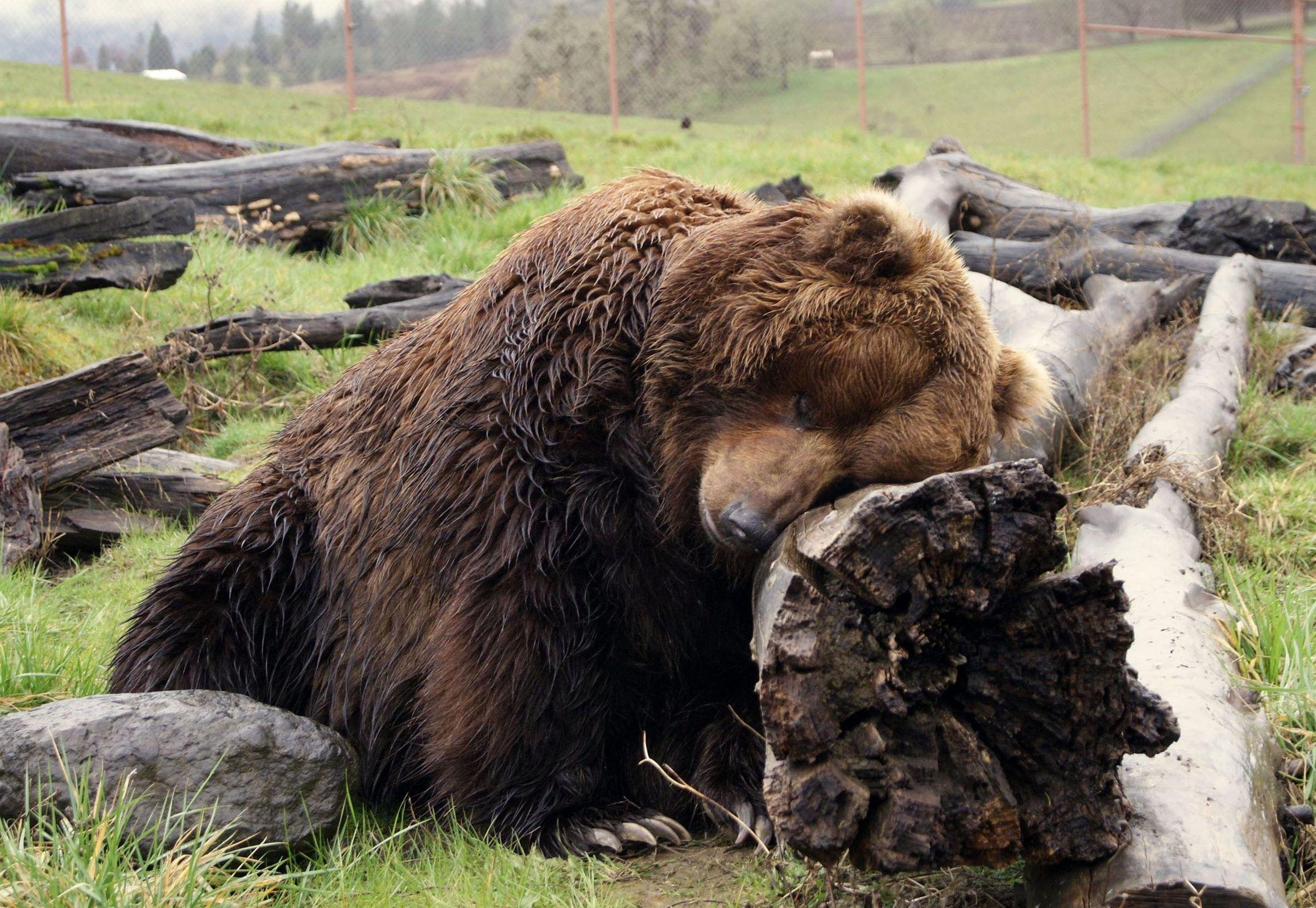 током статус картинка медведь поздравительной телеграммы опубликован