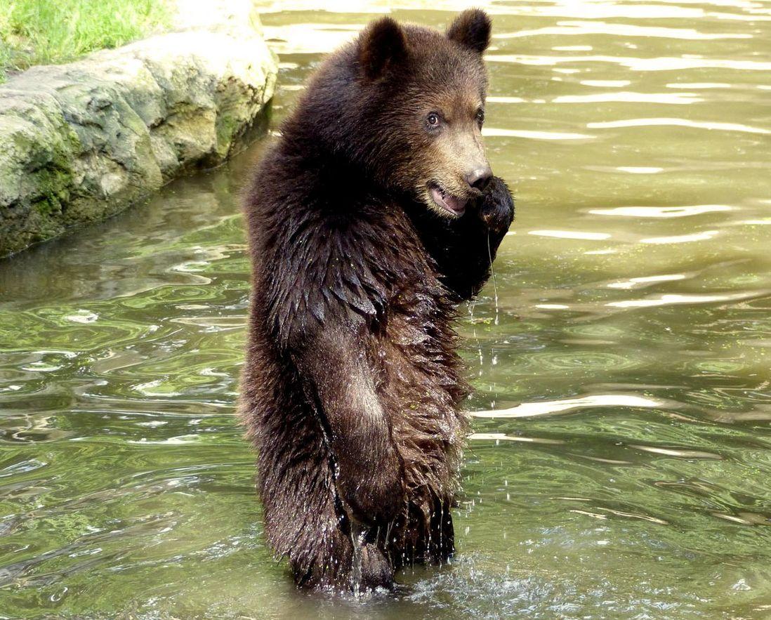 Картинка, очень смешные картинки с медведями
