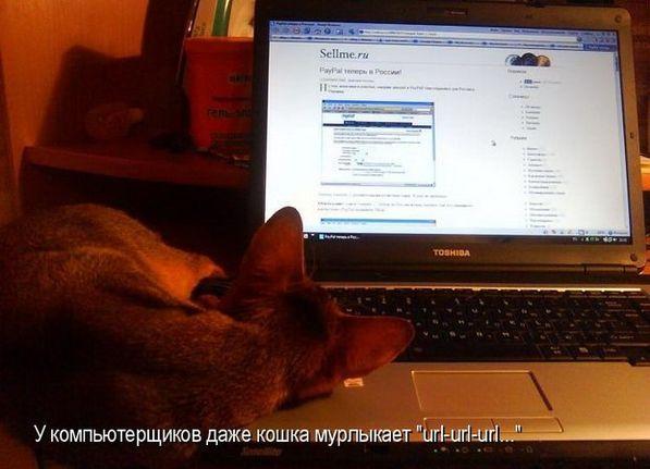 Прикольные картинки про животных онлайн бесплатно (55 фото)