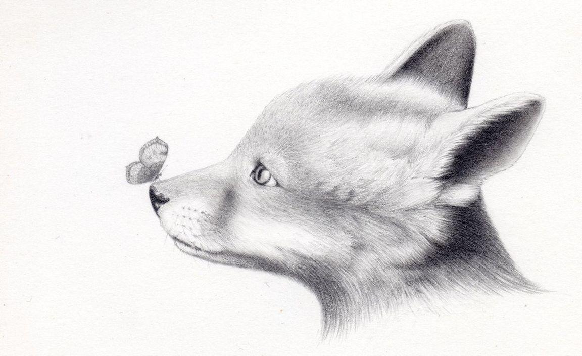 Рисунки животные не сложные