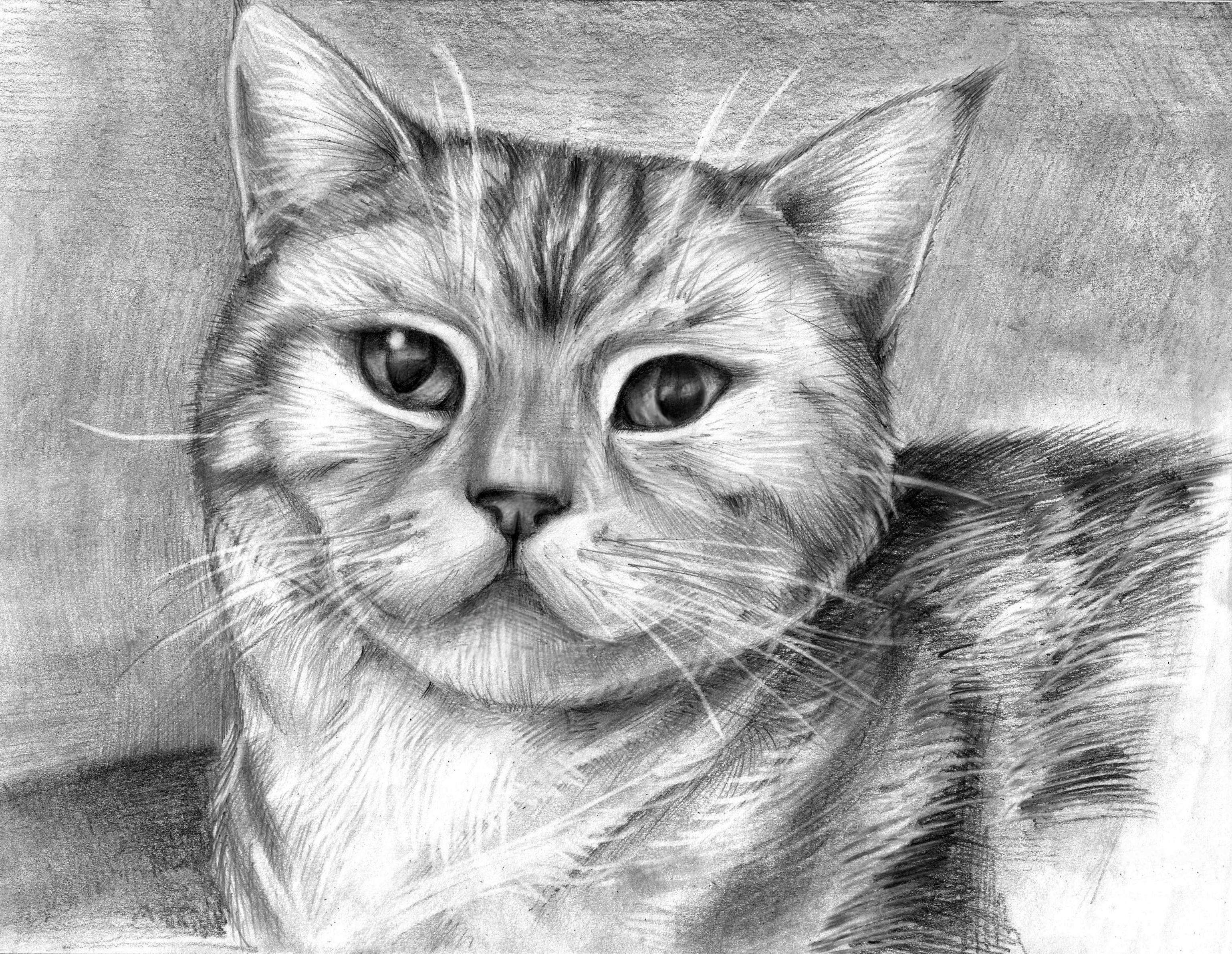 Рисунок животных фото