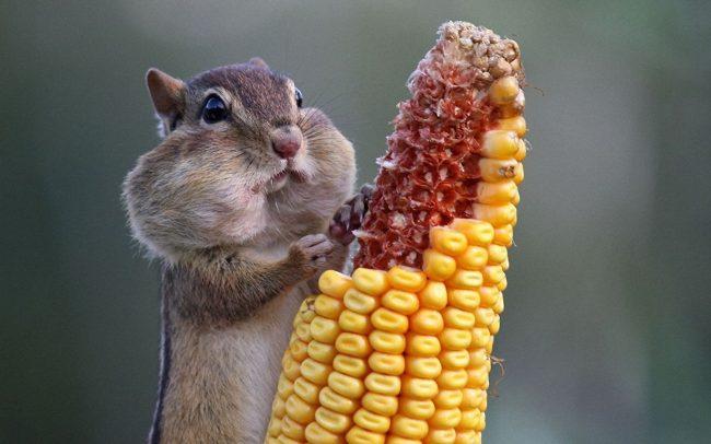 Скачать смешные картинки животных (45 фото)