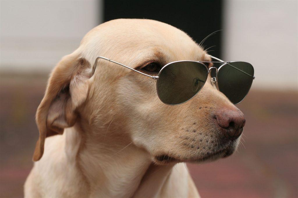 Смешные животные фото собаки, отправить поздравление