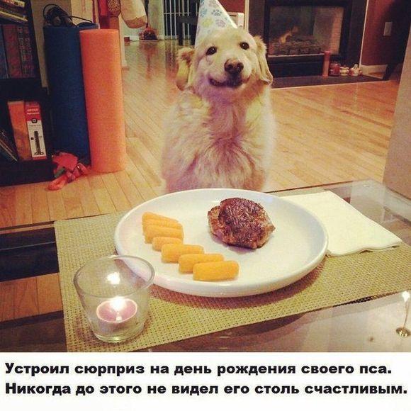 я хочу на день рождения собаку