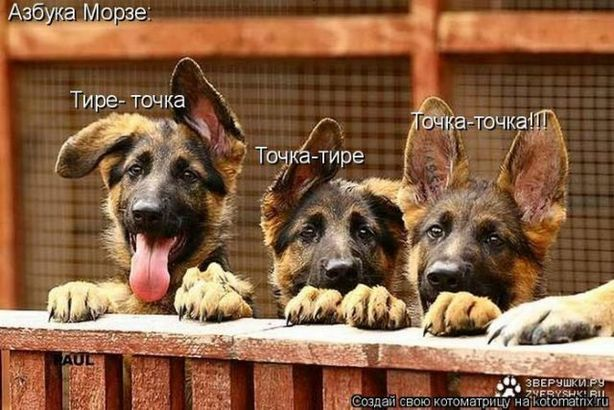 Картинки собак со смешными надписями, для
