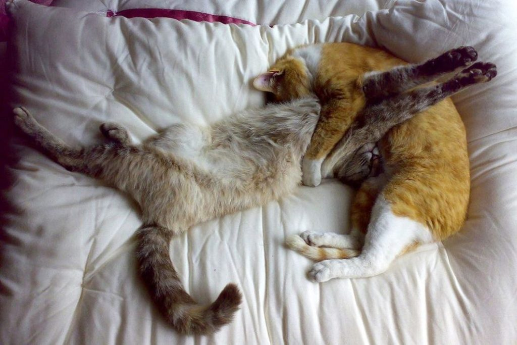 Смешные картинки поспала