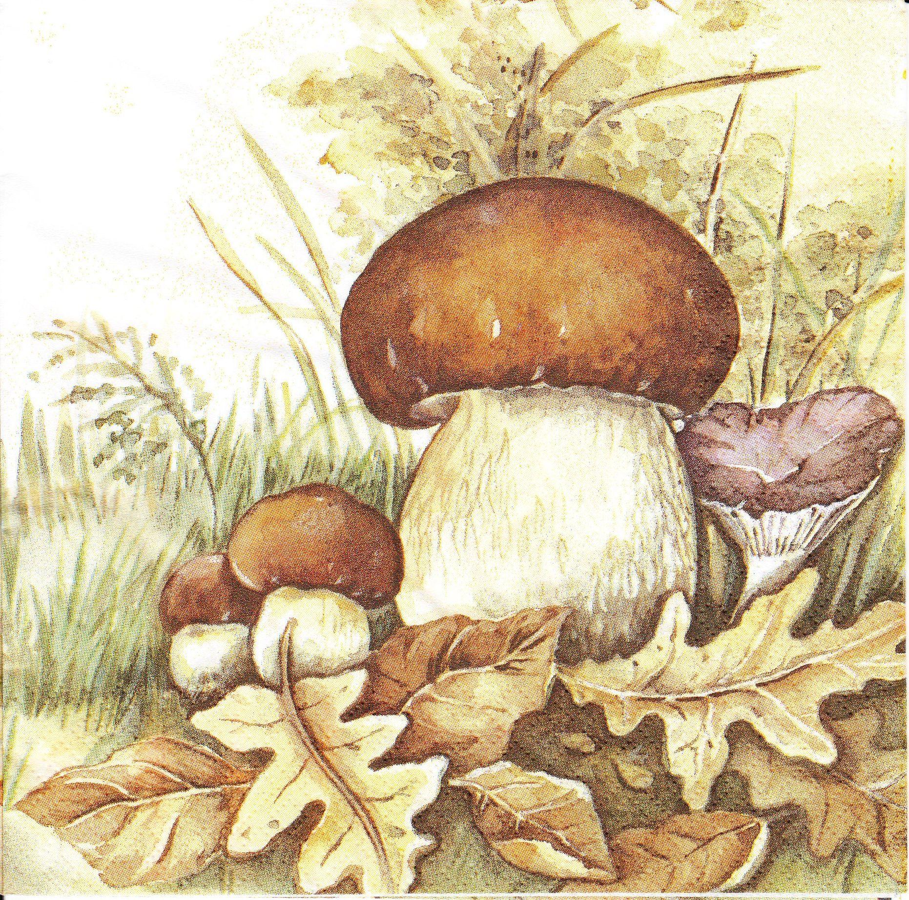 такой белый гриб рисунок картинка обожаемого