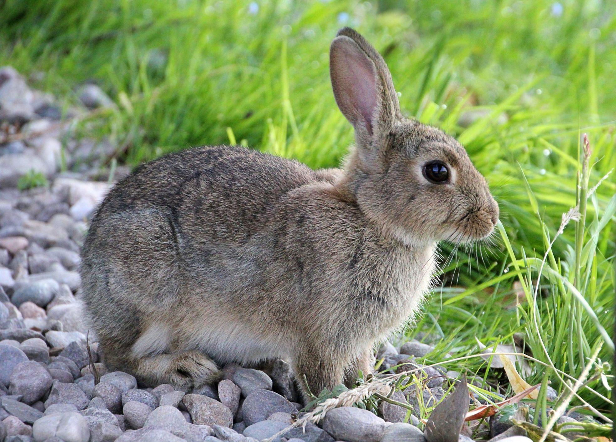 Открытках, картинки с кроликом для детей