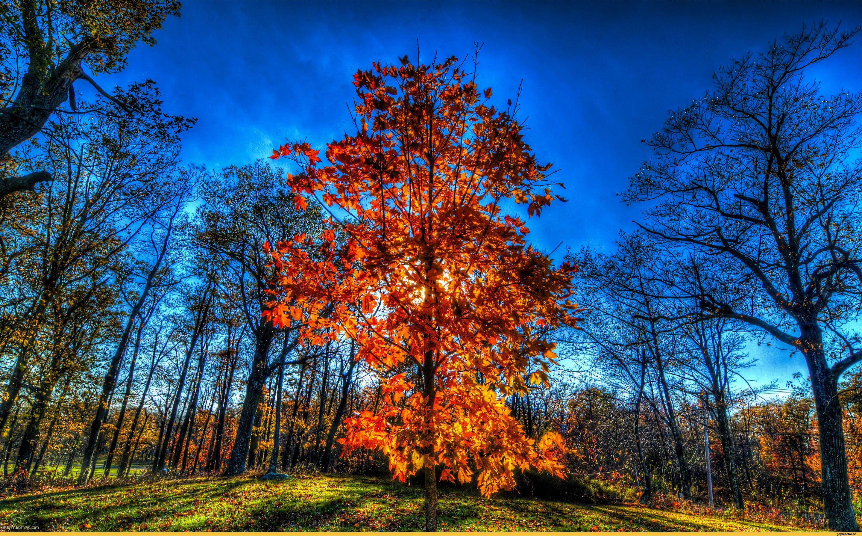 Картинки красивая осень (60 фото)