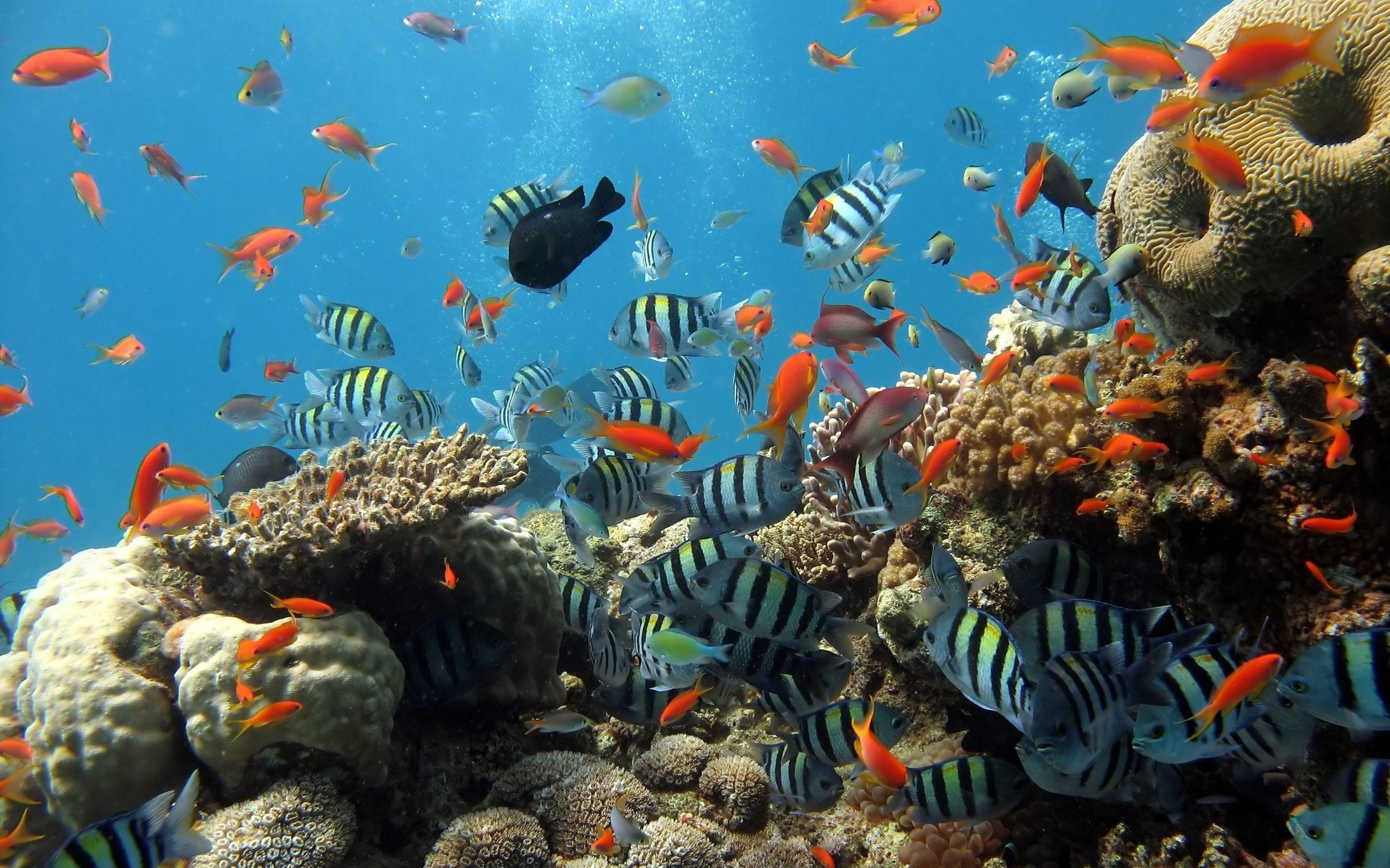 пойдёт картинки дна океана с рыбками что