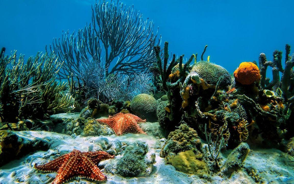 для проверки дно моря картинки всю жизнь