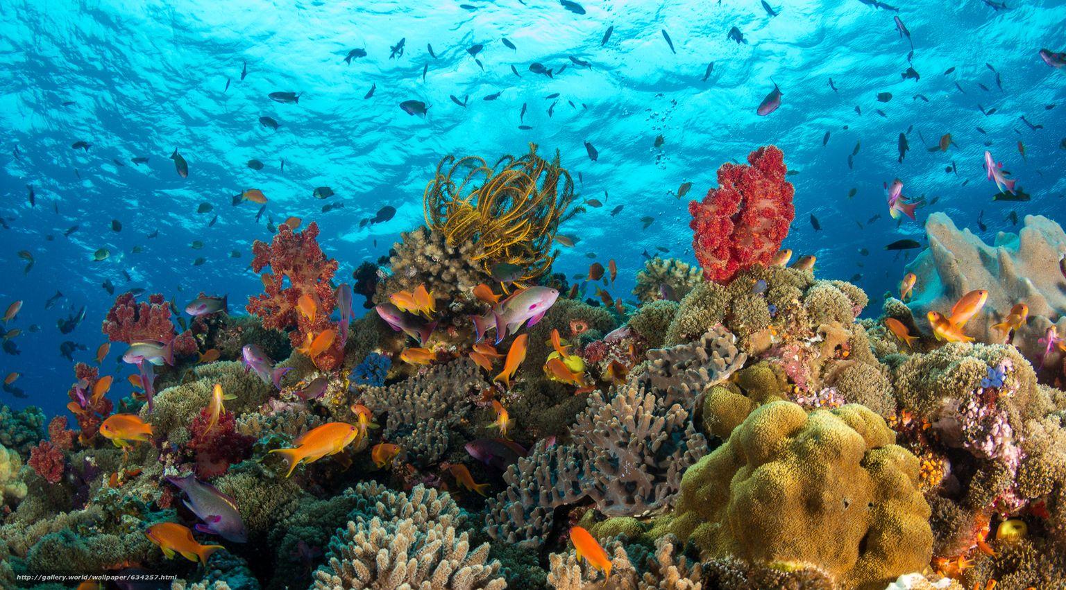 картинки дна океана с рыбками для возведения