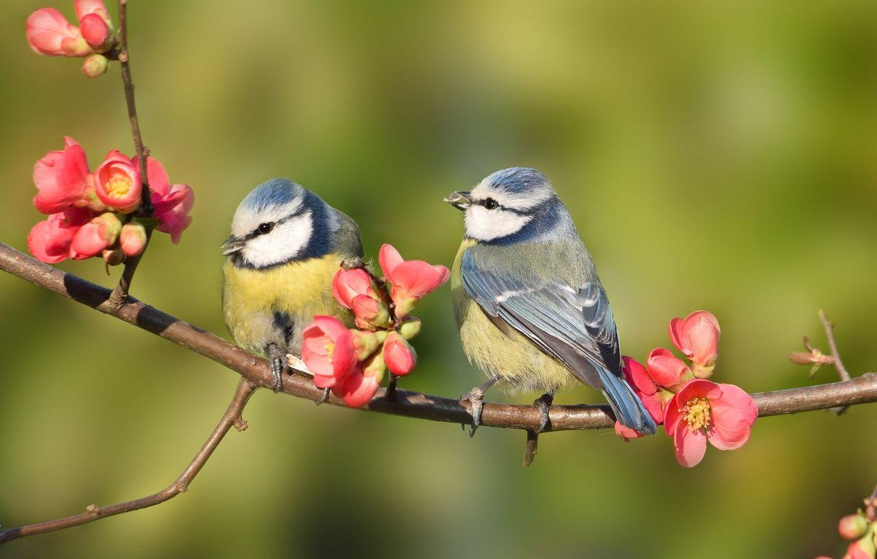 картинки птицы на ветвях многолюдный