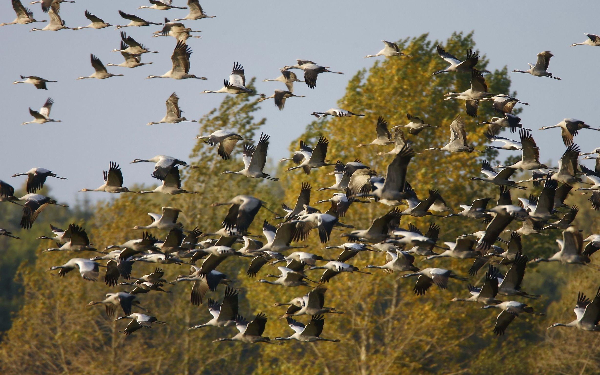 Фото с улетающими птицами