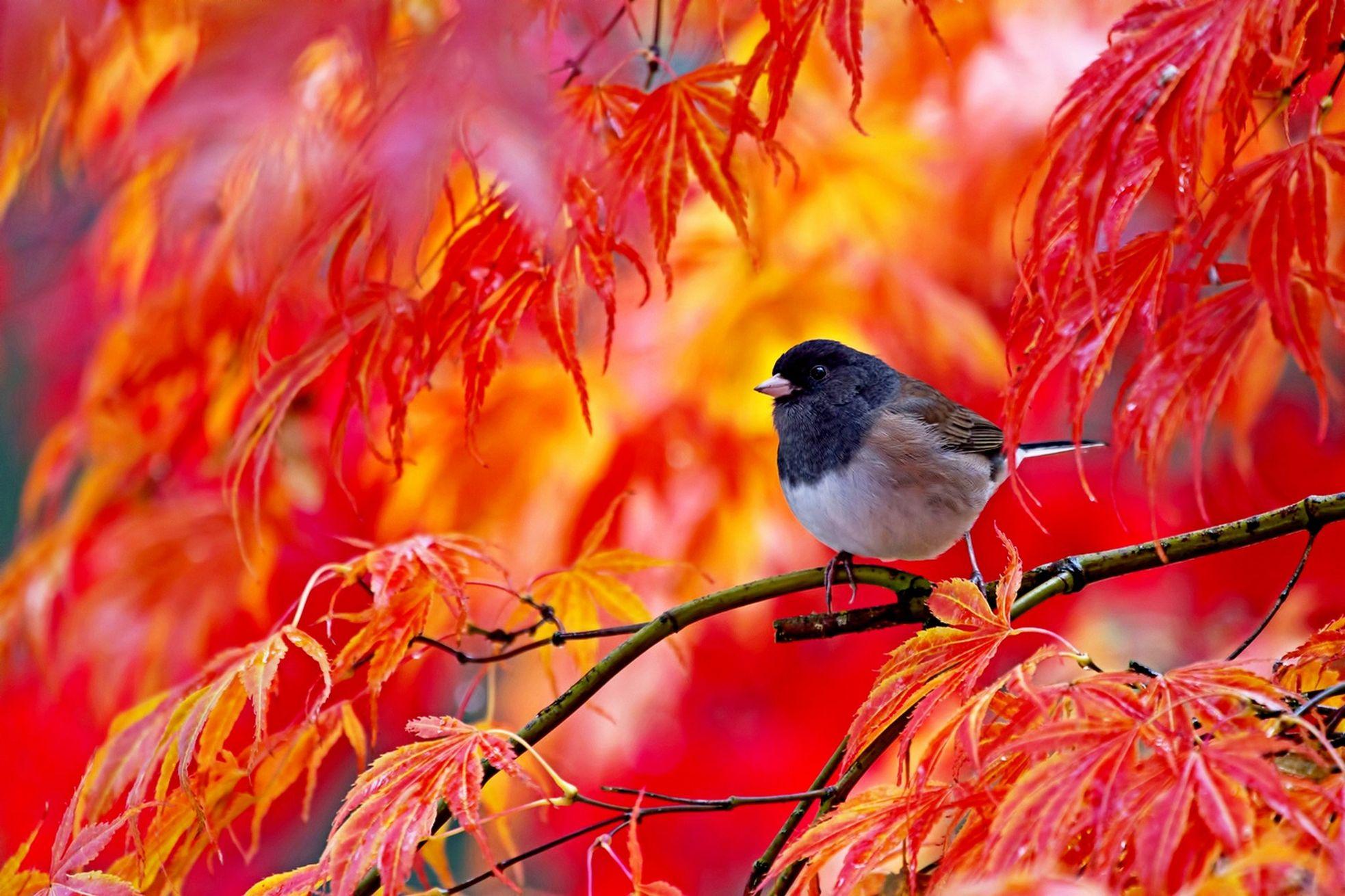 Лет, открытка ранняя птичка