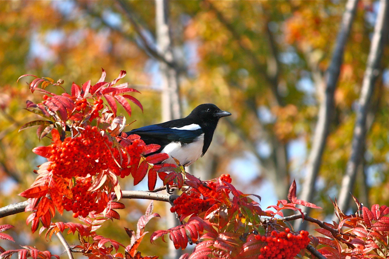 Осенняя птица картинки