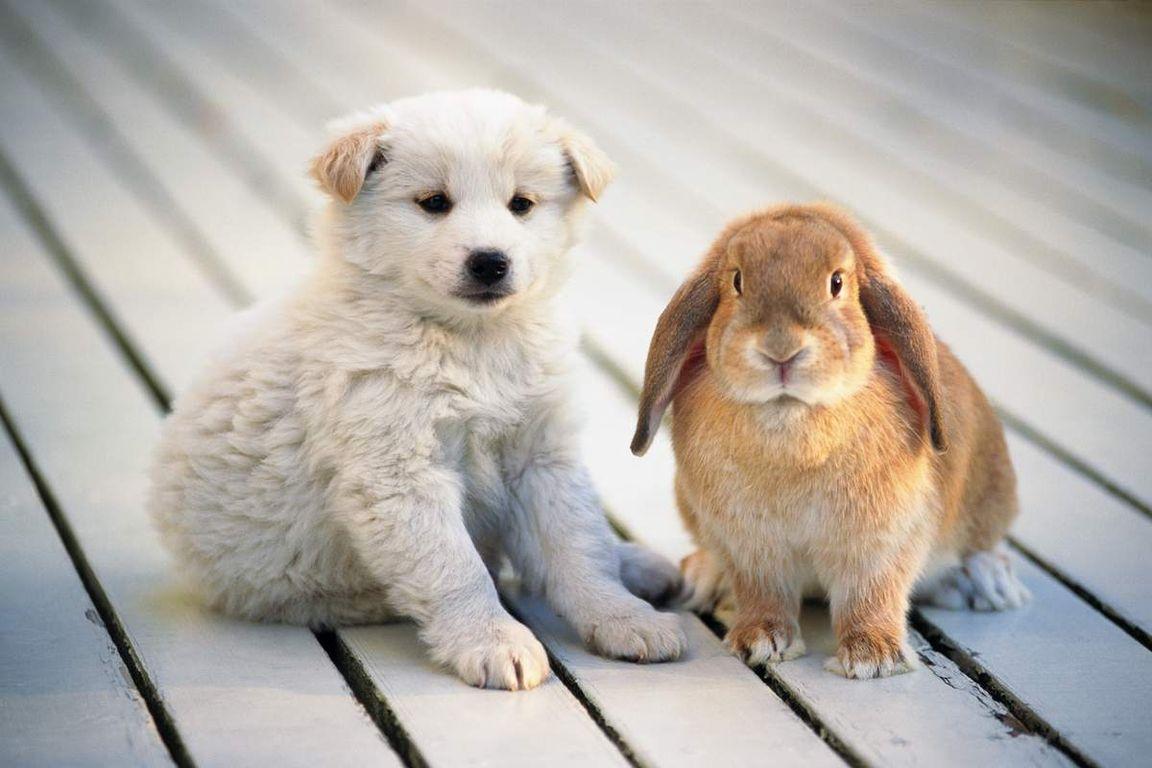 милые домашние животные картинки логика действиях