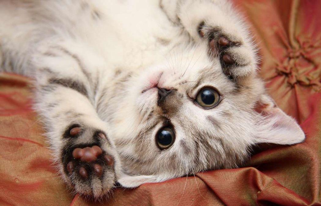 отличие картинки про няшек котят колбаса продукт требовательный
