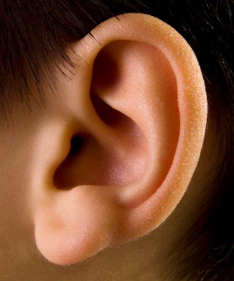 Уши в картинках для детей