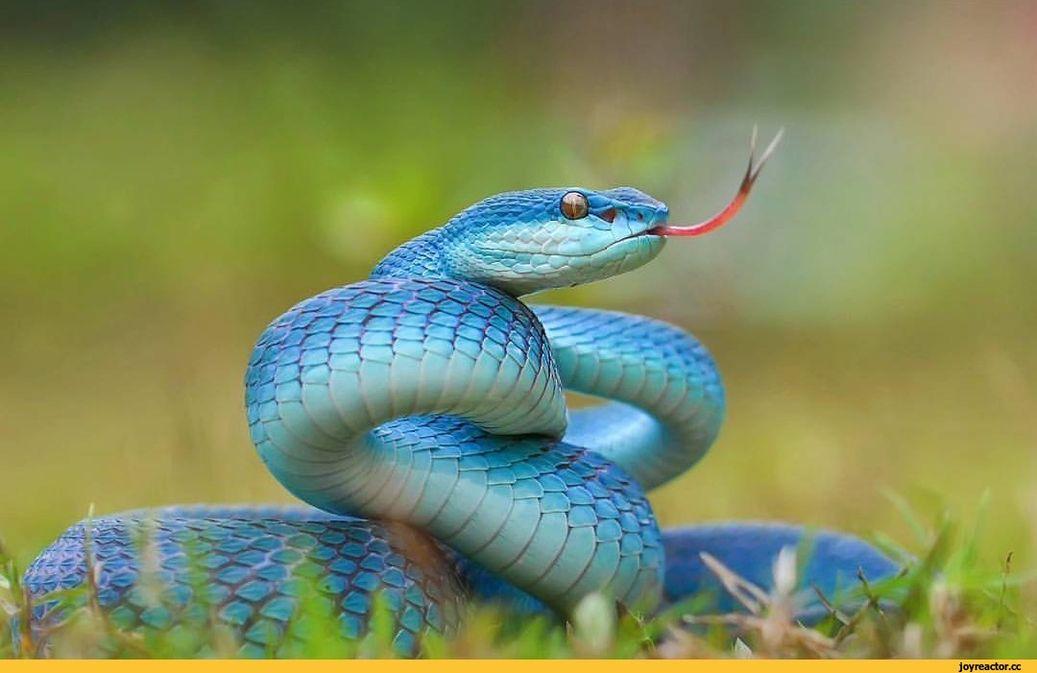 самые красивые змея в мире