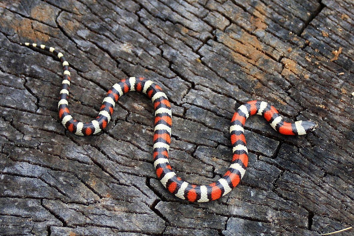против самые красивые змея в мире отличаются